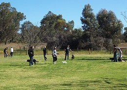 Dog Training Kwinana